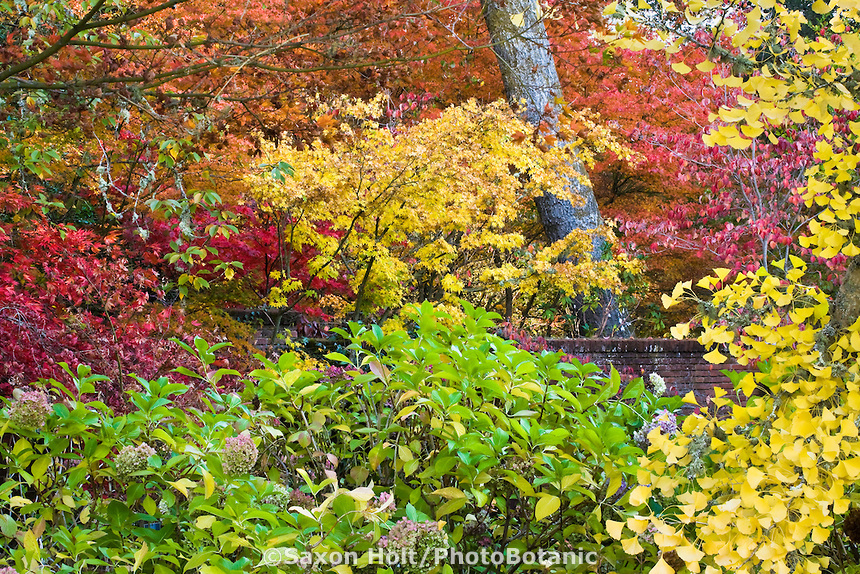 filoli autunno giardino california san francisco
