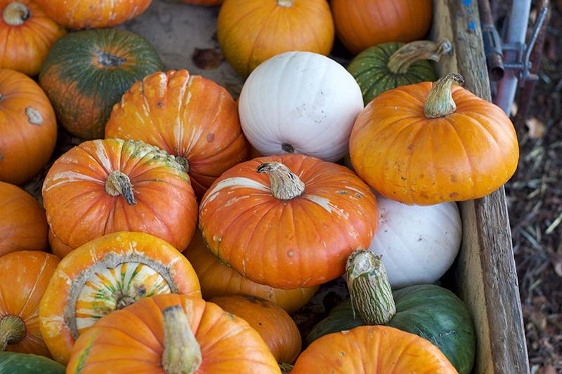 clancy zucche autunno san francisco