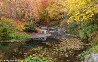 giardini botanici berkeley autunno